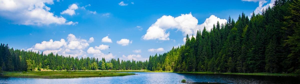 Direkt från skogen –biokomposit
